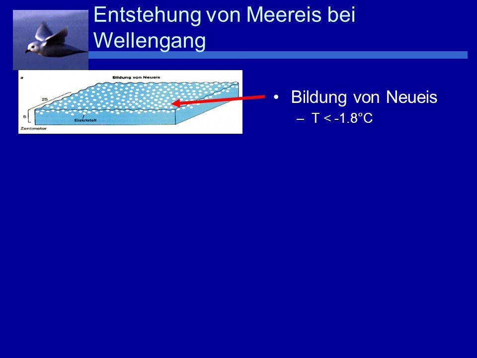Bildung von Neueis –T < -1.8°C Bildung von Pfannkucheneis Entstehung von Meereis bei Wellengang