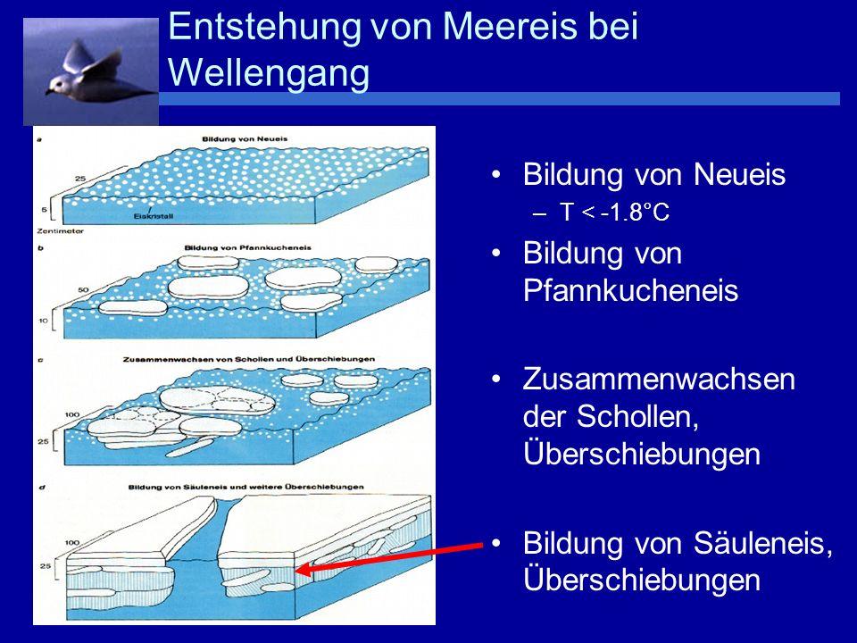 Mikrostruktur von Körncheneis Laugenkanälchen : Das Kristallgitter besteht nur aus Wassermolekülen Salze werden nicht ins Gitter mit eingebaut sondern in den Laugenkanälchen aufkonzentriert (Sole) c(Meereis) 34 o / oo c(Kanäle) 100 o / oo