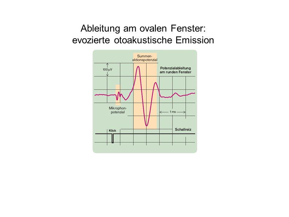 Ableitung am ovalen Fenster: evozierte otoakustische Emission