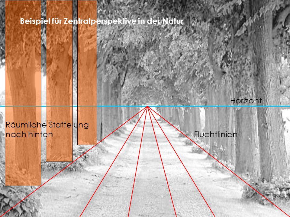 Horizont Fluchtlinien Räumliche Staffelung nach hinten Beispiel für Zentralperspektive in der Natur