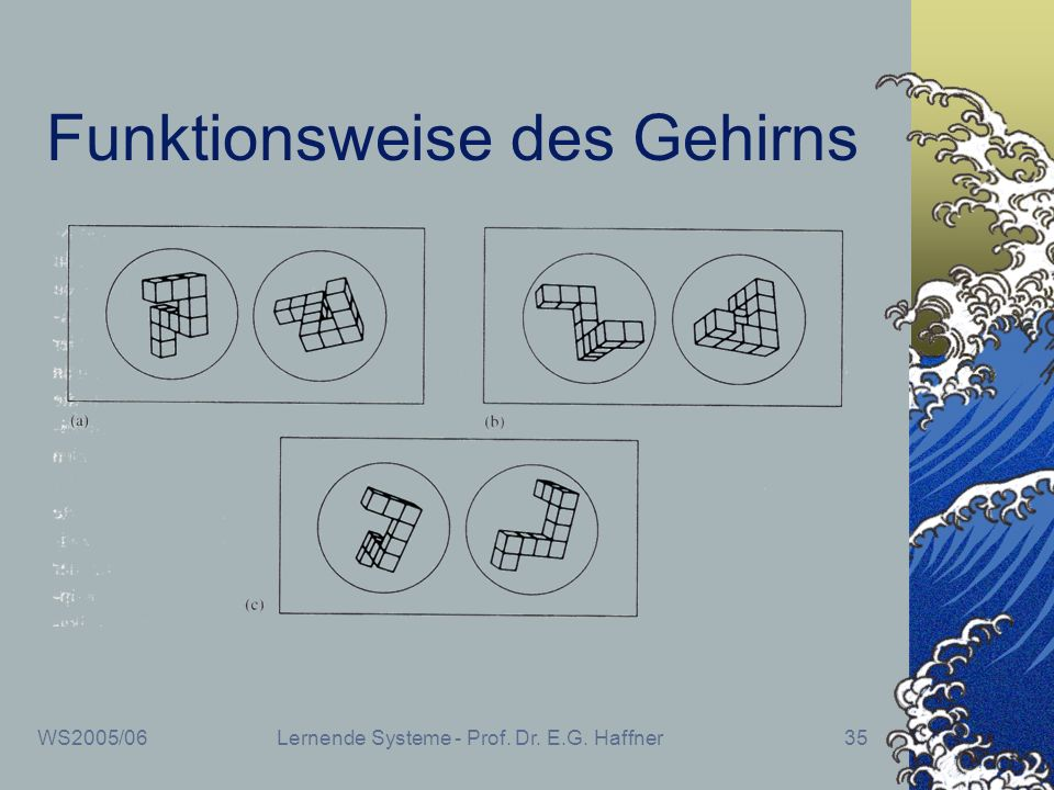 WS2005/06Lernende Systeme - Prof. Dr. E.G. Haffner35 Funktionsweise des Gehirns