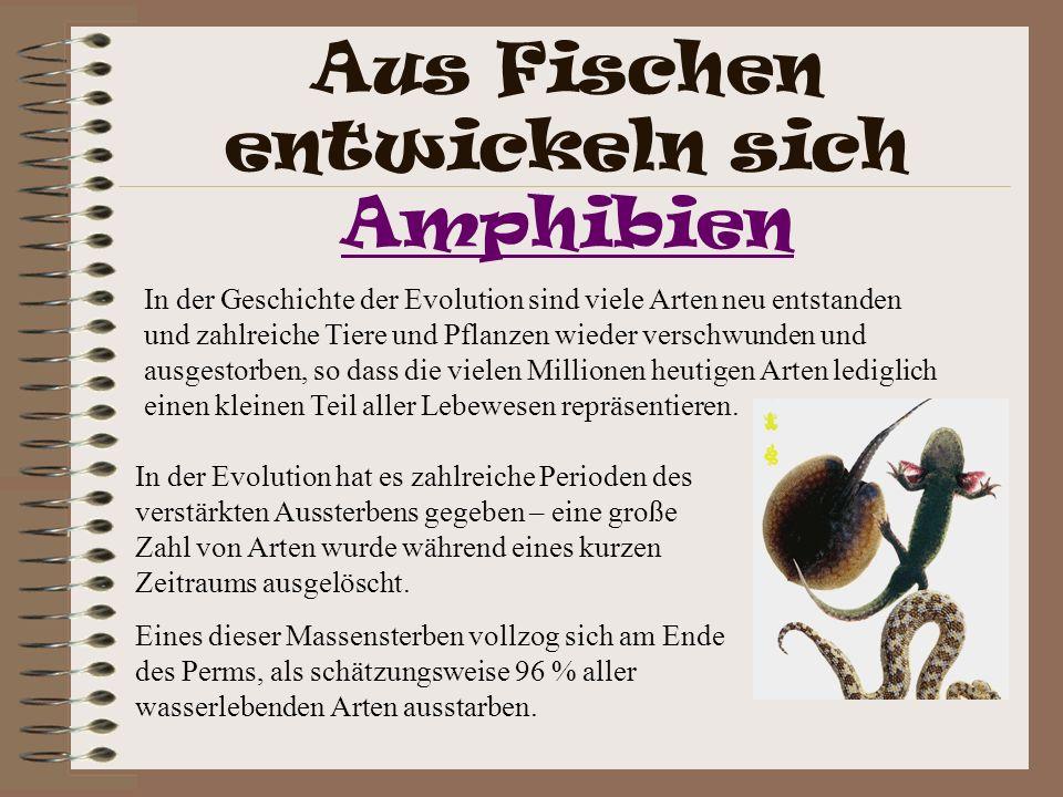 Aus Fischen entwickeln sich Amphibien Amphibien In der Evolution hat es zahlreiche Perioden des verstärkten Aussterbens gegeben – eine große Zahl von