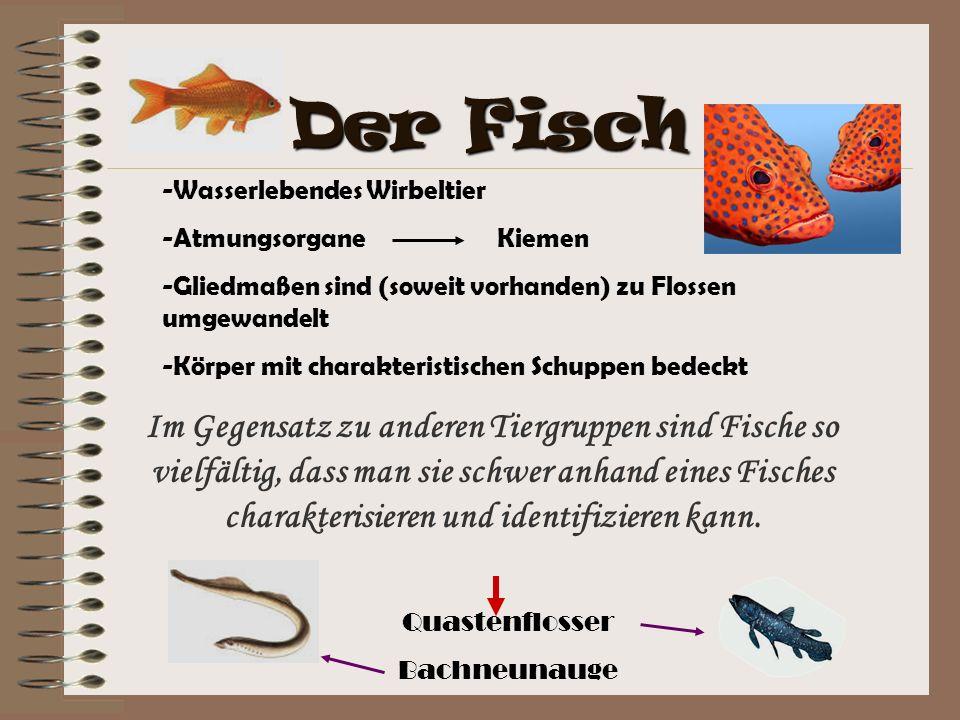 -Wasserlebendes Wirbeltier -Atmungsorgane Kiemen -Gliedmaßen sind (soweit vorhanden) zu Flossen umgewandelt -Körper mit charakteristischen Schuppen be
