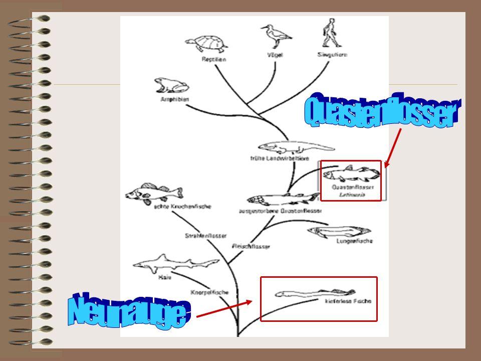 Entwicklungsbaum