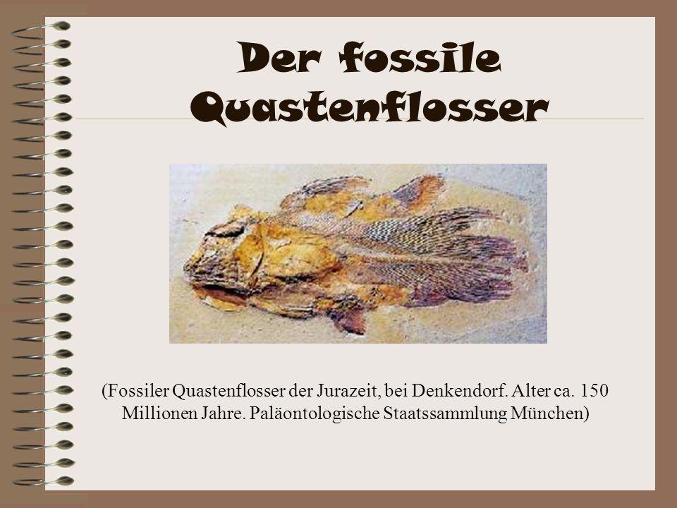 Der fossile Quastenflosser (Fossiler Quastenflosser der Jurazeit, bei Denkendorf. Alter ca. 150 Millionen Jahre. Paläontologische Staatssammlung Münch