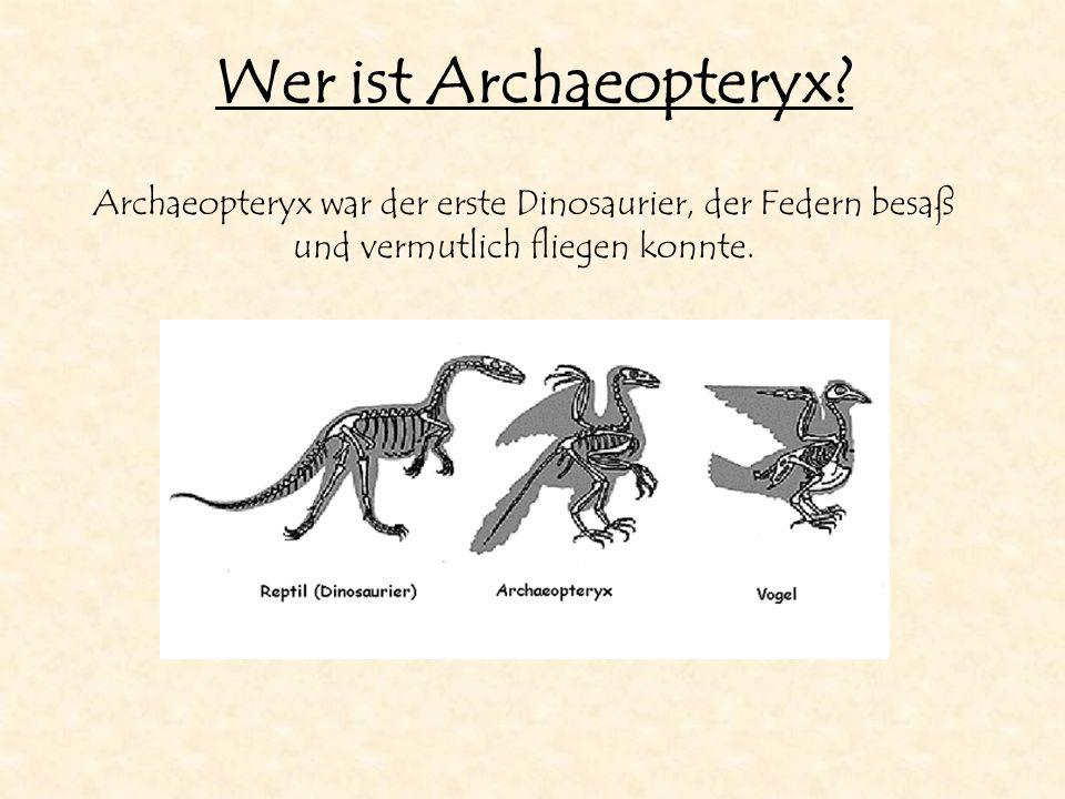 Wer ist Archaeopteryx? Archaeopteryx war der erste Dinosaurier, der Federn besaß und vermutlich fliegen konnte.