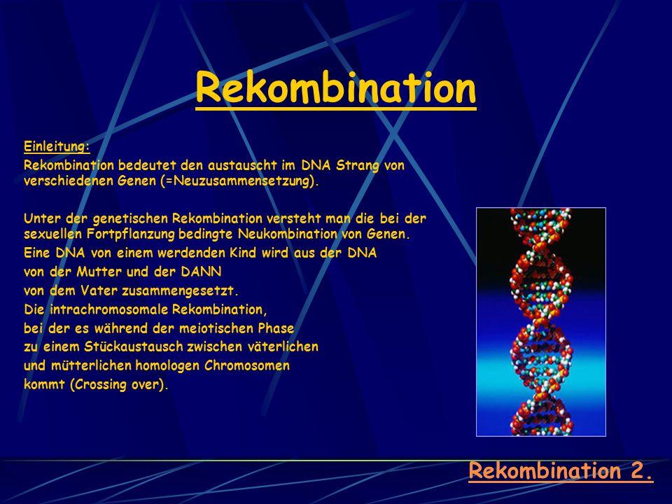 Rekombination Rekombination 2. Einleitung: Rekombination bedeutet den austauscht im DNA Strang von verschiedenen Genen (=Neuzusammensetzung). Unter de