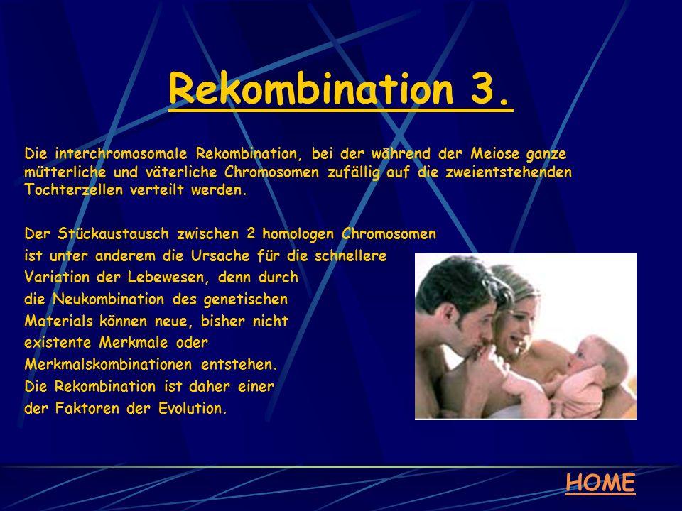 Rekombination 3. HOME Die interchromosomale Rekombination, bei der während der Meiose ganze mütterliche und väterliche Chromosomen zufällig auf die zw
