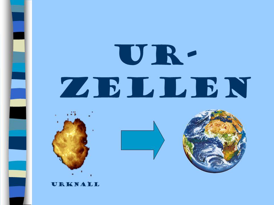 UR- ZELLEN urknall