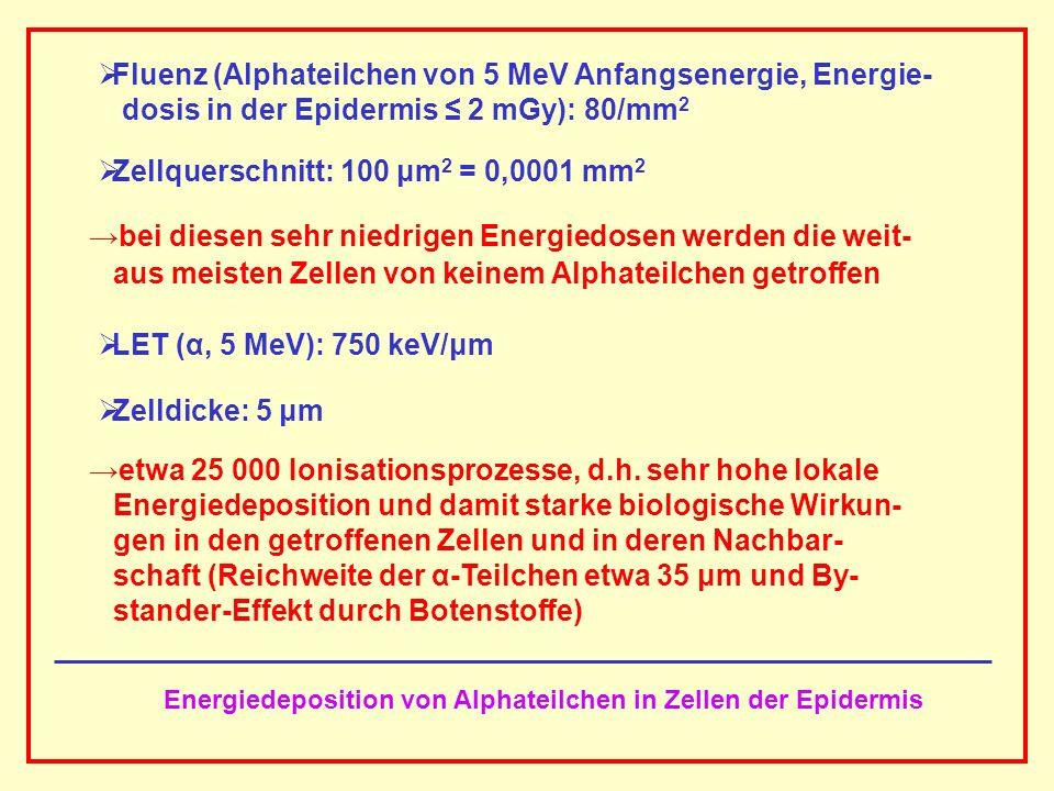 AAAAAAAAA BBBBBBBBBB AAAAAAAAA Fluenz (Alphateilchen von 5 MeV Anfangsenergie, Energie- dosis in der Epidermis 2 mGy): 80/mm 2 Zellquerschnitt: 100 μm