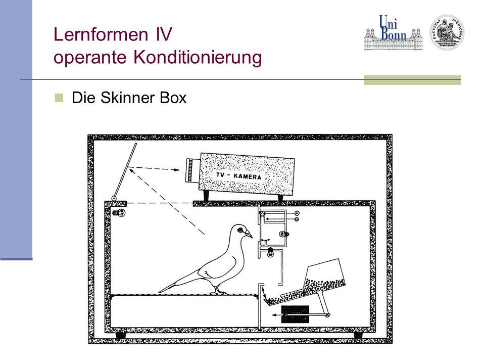 Lernformen IV operante Konditionierung Die Skinner Box