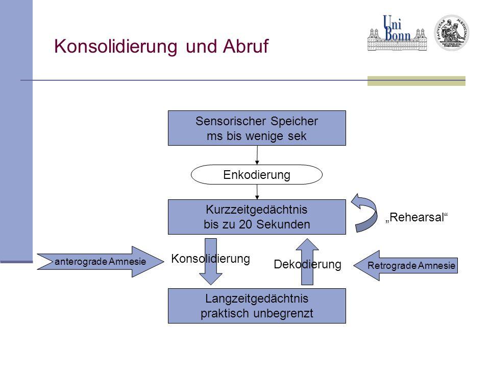 Konsolidierung und Abruf Sensorischer Speicher ms bis wenige sek Enkodierung Rehearsal Konsolidierung Dekodierung anterograde Amnesie Retrograde Amnes