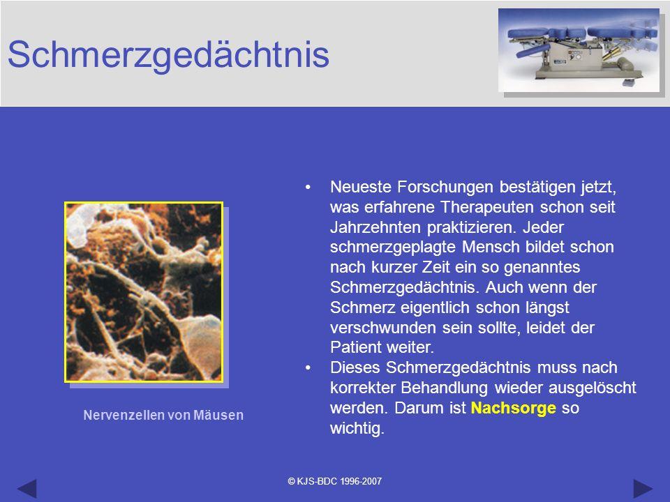 © KJS-BDC 1996-2007 Schmerzgedächtnis Nervenzellen von Mäusen Neueste Forschungen bestätigen jetzt, was erfahrene Therapeuten schon seit Jahrzehnten p