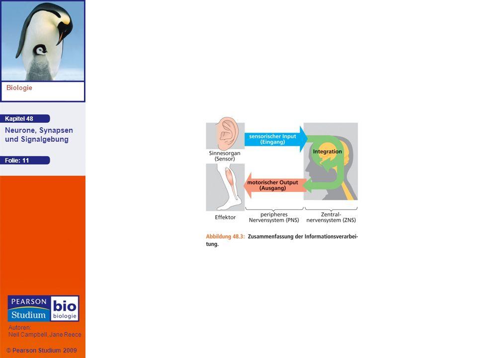 Kapitel 48 Biologie Autoren: Neil Campbell, Jane Reece Neurone, Synapsen und Signalgebung © Pearson Studium 2009 Folie: 11