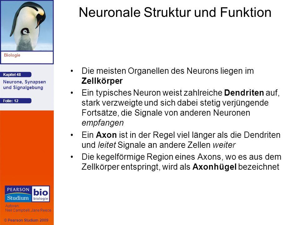 © Pearson Studium 2009 Kapitel 48 Biologie Autoren: Neil Campbell, Jane Reece Neurone, Synapsen und Signalgebung Folie: 12 Neuronale Struktur und Funk