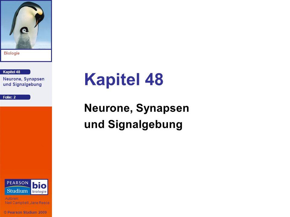 © Pearson Studium 2009 Kapitel 48 Biologie Autoren: Neil Campbell, Jane Reece Neurone, Synapsen und Signalgebung Folie: 23 Das Gleichgewichtspotenzial (E ion ) ist d ie Größe der Membranspannung beim Gleichgewicht für ein bestimmtes Ion u nd lässt sich mithilfe der Nernst- Gleichung berechnen : E ion = 62 mV (log[ion] außen /[ion] innen ) Das Gleichgewichtspotenzial von K + (E K ) ist negativ, wohingegen das Gleichgewichtspotenzial von Na + (E Na ) positiv ist