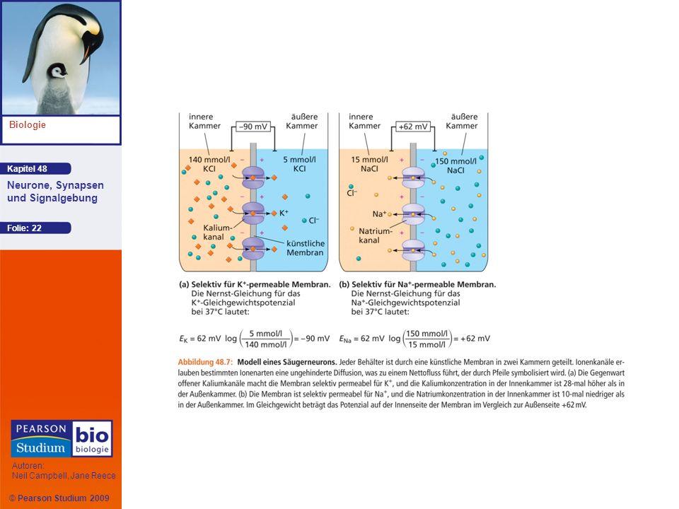 Kapitel 48 Biologie Autoren: Neil Campbell, Jane Reece Neurone, Synapsen und Signalgebung © Pearson Studium 2009 Folie: 22