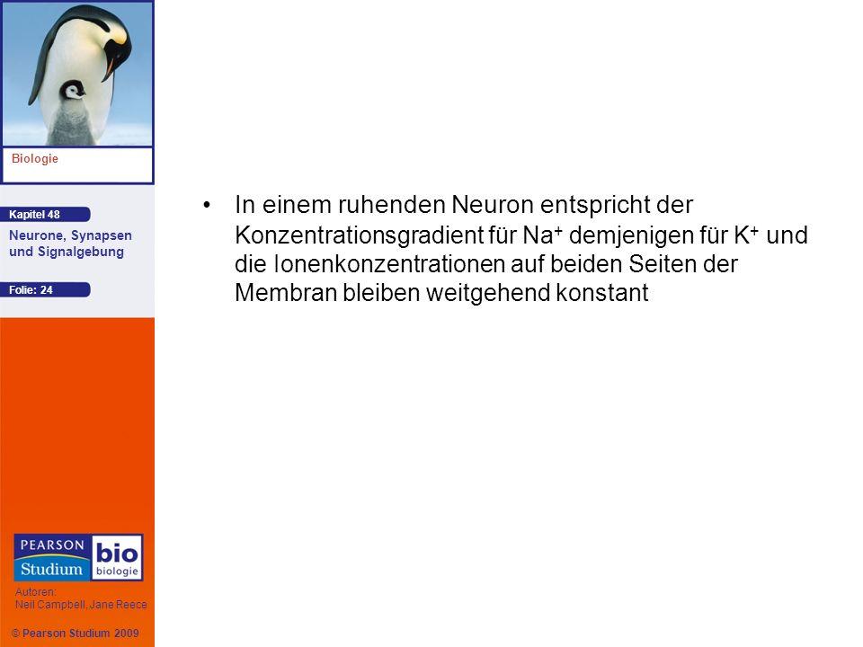 © Pearson Studium 2009 Kapitel 48 Biologie Autoren: Neil Campbell, Jane Reece Neurone, Synapsen und Signalgebung Folie: 24 In einem ruhenden Neuron en