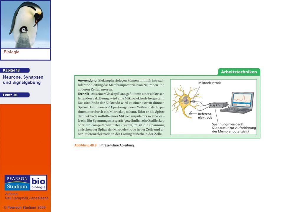Kapitel 48 Biologie Autoren: Neil Campbell, Jane Reece Neurone, Synapsen und Signalgebung © Pearson Studium 2009 Folie: 26