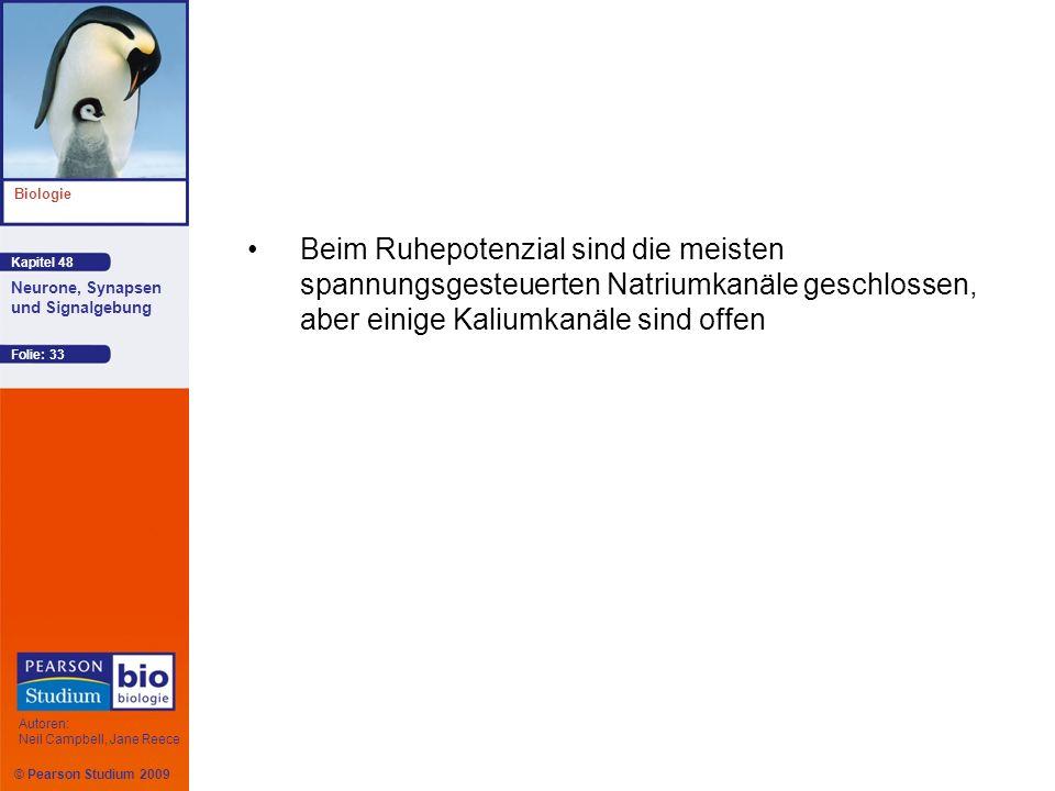 © Pearson Studium 2009 Kapitel 48 Biologie Autoren: Neil Campbell, Jane Reece Neurone, Synapsen und Signalgebung Folie: 33 Beim Ruhepotenzial sind die