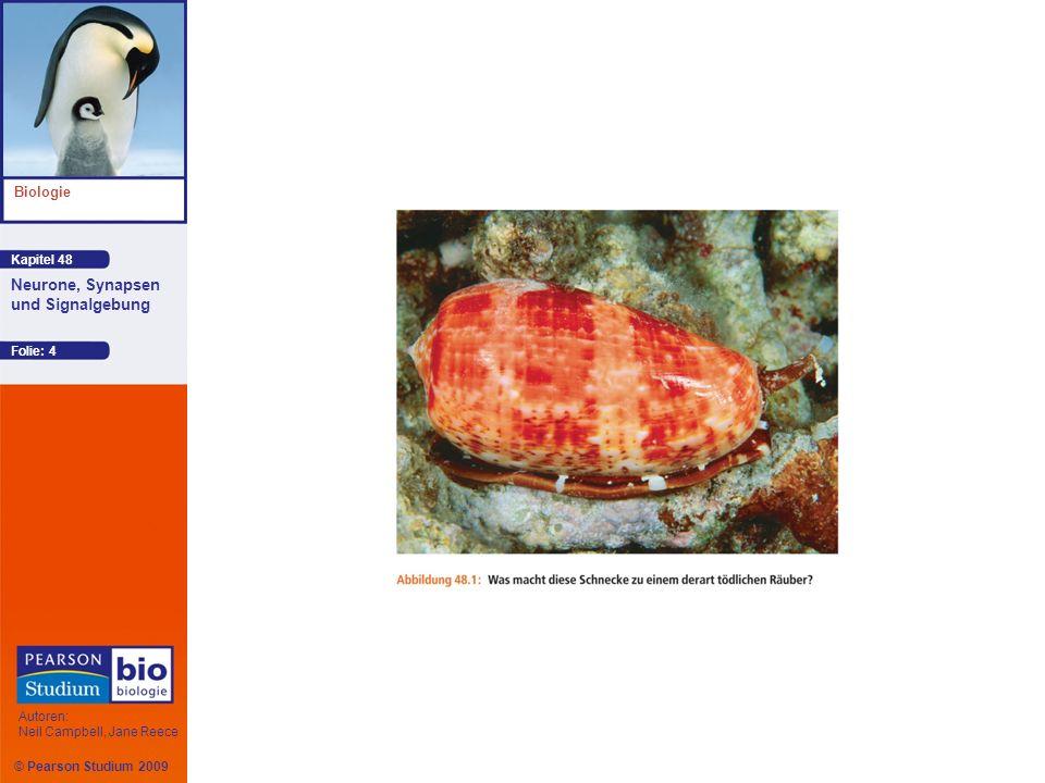 © Pearson Studium 2009 Kapitel 48 Biologie Autoren: Neil Campbell, Jane Reece Neurone, Synapsen und Signalgebung Folie: 5 Die Informationen werden in Form elektrischer Signale weitergeleitet, die von Ionenbewegungen getragen werden Die Signalverarbeitung höherer Ordnung wird weitgehend von Neuronengruppen übernommen, die zu einem Gehirn organisiert sind oder aber einfachere Zellgruppen bilden, die als Ganglien bezeichnet werden