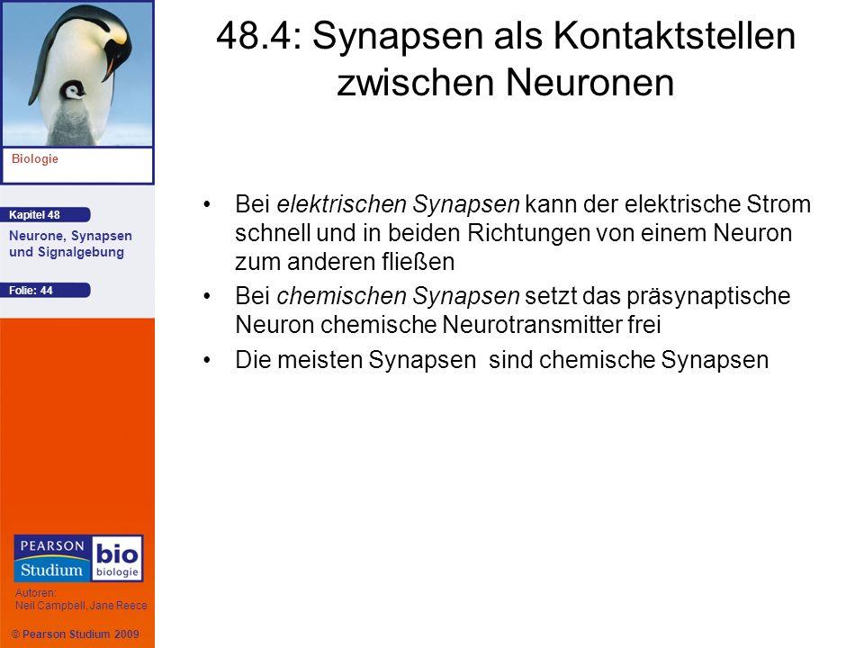 © Pearson Studium 2009 Kapitel 48 Biologie Autoren: Neil Campbell, Jane Reece Neurone, Synapsen und Signalgebung Folie: 44 48.4: Synapsen als Kontakts