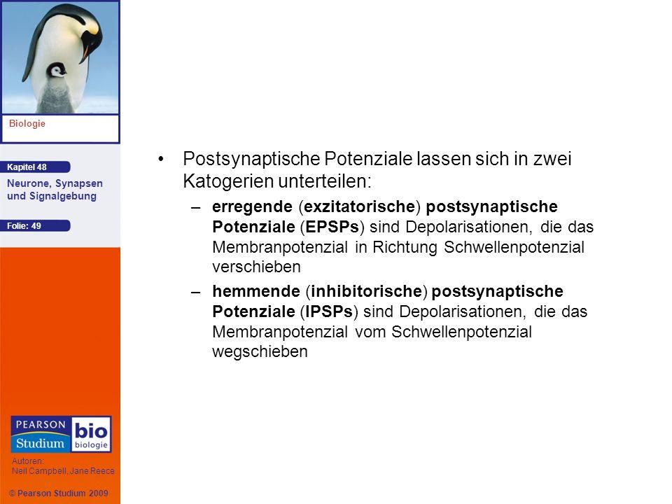 © Pearson Studium 2009 Kapitel 48 Biologie Autoren: Neil Campbell, Jane Reece Neurone, Synapsen und Signalgebung Folie: 49 Postsynaptische Potenziale