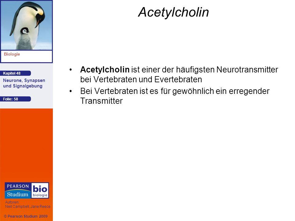 © Pearson Studium 2009 Kapitel 48 Biologie Autoren: Neil Campbell, Jane Reece Neurone, Synapsen und Signalgebung Folie: 58 Acetylcholin Acetylcholin i