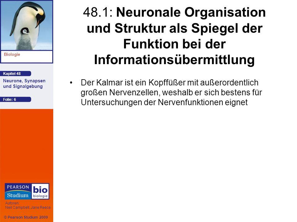 © Pearson Studium 2009 Kapitel 48 Biologie Autoren: Neil Campbell, Jane Reece Neurone, Synapsen und Signalgebung Folie: 6 48.1: Neuronale Organisation
