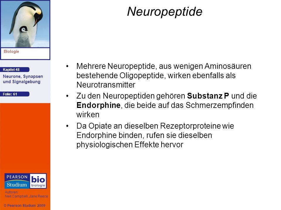 © Pearson Studium 2009 Kapitel 48 Biologie Autoren: Neil Campbell, Jane Reece Neurone, Synapsen und Signalgebung Folie: 61 Neuropeptide Mehrere Neurop