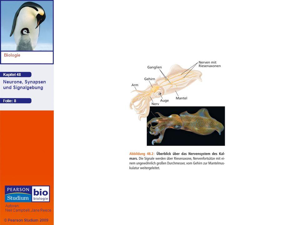 © Pearson Studium 2009 Kapitel 48 Biologie Autoren: Neil Campbell, Jane Reece Neurone, Synapsen und Signalgebung Folie: 19 Ionenkanäle in der Plasmamembran wandeln das chemische Potenzial in ein elektrisches Potenzial um Ein Neuron in Ruhe weist weit mehr offene Kaliumkanäle auf als offene Natriumkanäle ; K + diffundiert durch offene Kaliumkanäle Intrazelluläre Anionen, die nicht durch die Membran ausströmen, tragen zu einem Überschuss von negativen Ladungen im Zellinneren bei Animation: Resting Potential Animation: Resting Potential