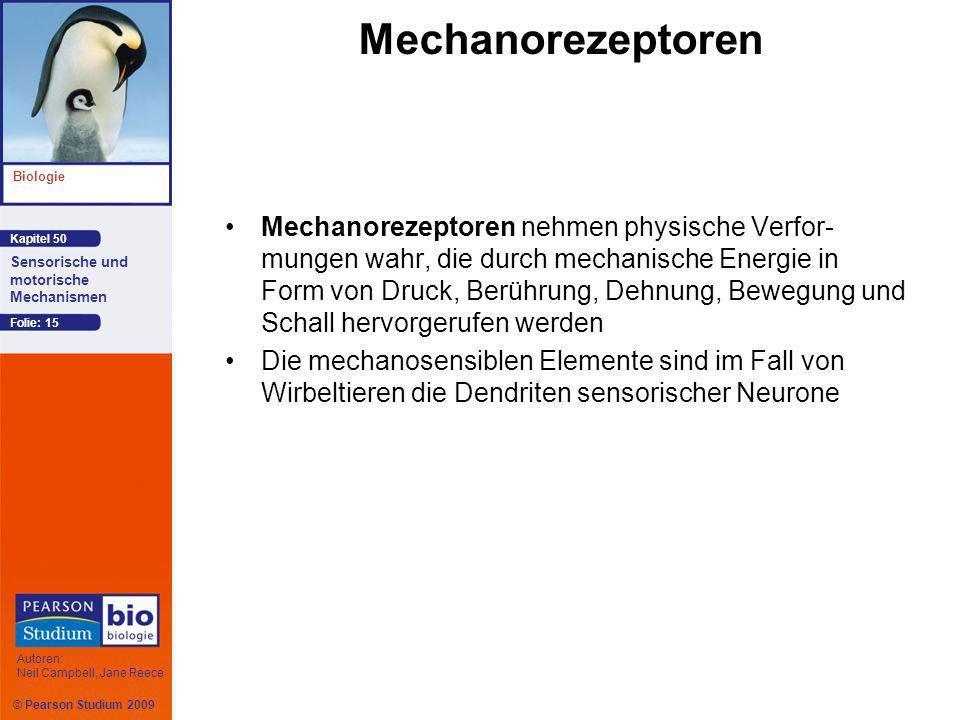 © Pearson Studium 2009 Kapitel 50 Biologie Autoren: Neil Campbell, Jane Reece Sensorische und motorische Mechanismen Folie: 15 Mechanorezeptoren Mecha