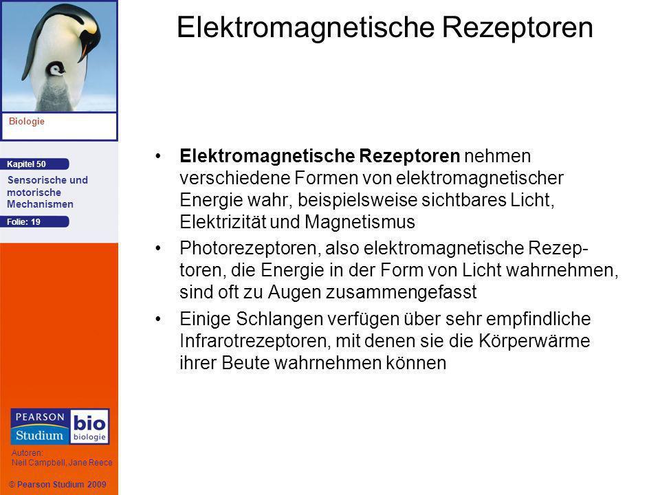 © Pearson Studium 2009 Kapitel 50 Biologie Autoren: Neil Campbell, Jane Reece Sensorische und motorische Mechanismen Folie: 19 Elektromagnetische Rezeptoren Elektromagnetische Rezeptoren nehmen verschiedene Formen von elektromagnetischer Energie wahr, beispielsweise sichtbares Licht, Elektrizität und Magnetismus Photorezeptoren, also elektromagnetische Rezep- toren, die Energie in der Form von Licht wahrnehmen, sind oft zu Augen zusammengefasst Einige Schlangen verfügen über sehr empfindliche Infrarotrezeptoren, mit denen sie die Körperwärme ihrer Beute wahrnehmen können