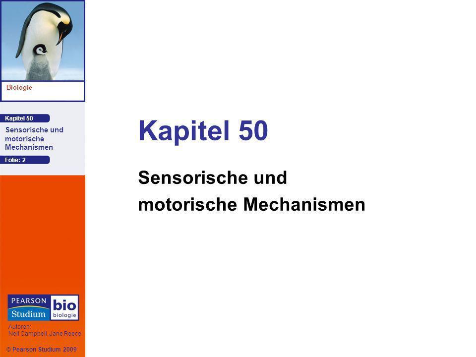 © Pearson Studium 2009 Kapitel 50 Biologie Autoren: Neil Campbell, Jane Reece Sensorische und motorische Mechanismen Folie: 13 Verstärkung und Adaptation Die Reizenergie wird während des Transduktions- prozesses erhöht.