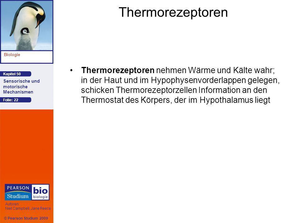 © Pearson Studium 2009 Kapitel 50 Biologie Autoren: Neil Campbell, Jane Reece Sensorische und motorische Mechanismen Folie: 22 Thermorezeptoren Thermorezeptoren nehmen Wärme und Kälte wahr; in der Haut und im Hypophysenvorderlappen gelegen, schicken Thermorezeptorzellen Information an den Thermostat des Körpers, der im Hypothalamus liegt