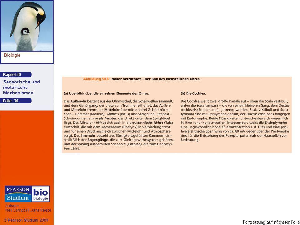 Kapitel 50 Biologie Autoren: Neil Campbell, Jane Reece Sensorische und motorische Mechanismen © Pearson Studium 2009 Folie: 30
