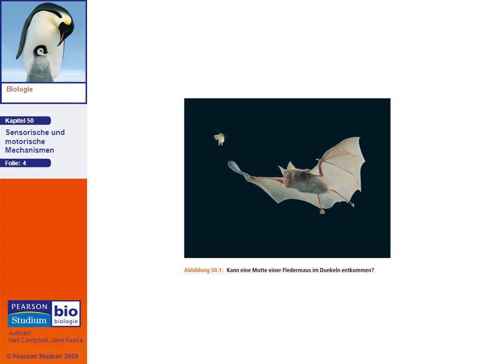 © Pearson Studium 2009 Kapitel 50 Biologie Autoren: Neil Campbell, Jane Reece Sensorische und motorische Mechanismen Folie: 65 Wenn Rhodopsin Licht absorbiert, verändert sich eine Bindung im Retinal von einer cis- in eine trans- Konfiguration, so dass sich das Molekül aus einer abgeknickten in eine gestreckte Form umwandelt Dies hyperpolarisiert die Photorezeptorzelle
