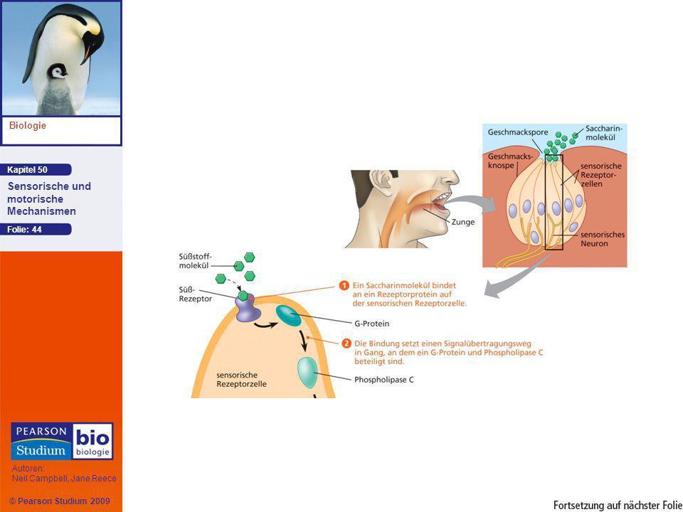 Kapitel 50 Biologie Autoren: Neil Campbell, Jane Reece Sensorische und motorische Mechanismen © Pearson Studium 2009 Folie: 44