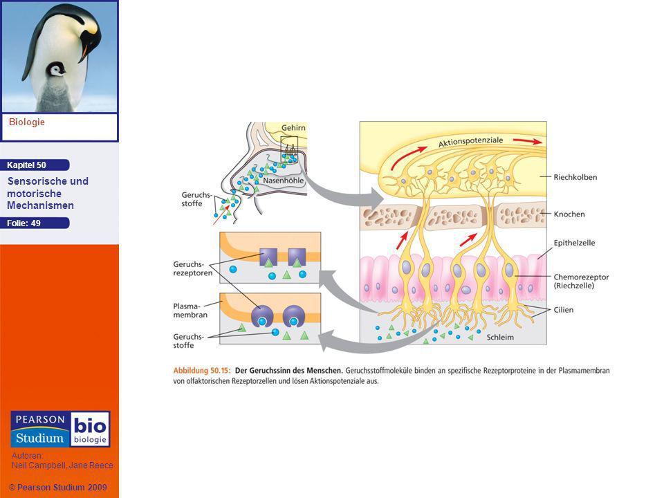 Kapitel 50 Biologie Autoren: Neil Campbell, Jane Reece Sensorische und motorische Mechanismen © Pearson Studium 2009 Folie: 49