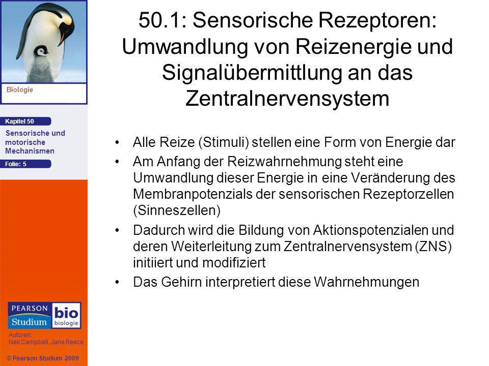 © Pearson Studium 2009 Kapitel 50 Biologie Autoren: Neil Campbell, Jane Reece Sensorische und motorische Mechanismen Folie: 56 Das Sehsystem von Wirbeltieren Bei den Wirbeltieren nimmt das Auge Farben und Licht wahr, aber es ist das Gehirn, das die aufgenommenen Informationen zu einem kompletten Bild zusammensetzt
