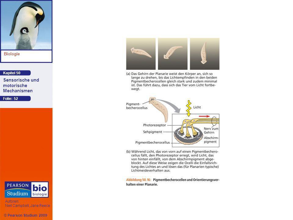 Kapitel 50 Biologie Autoren: Neil Campbell, Jane Reece Sensorische und motorische Mechanismen © Pearson Studium 2009 Folie: 52