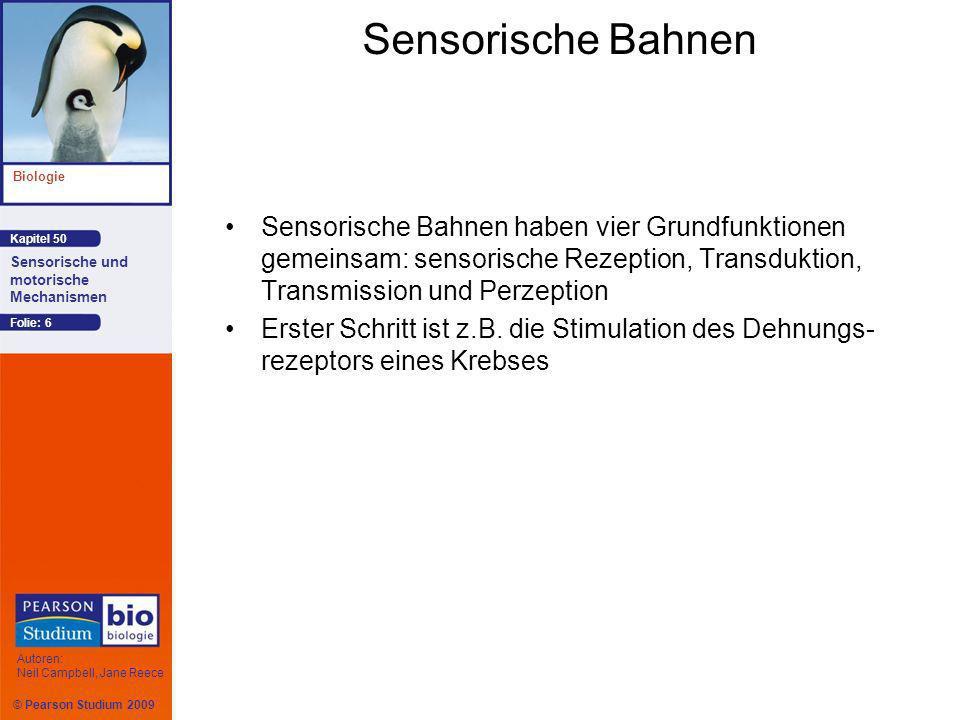 © Pearson Studium 2009 Kapitel 50 Biologie Autoren: Neil Campbell, Jane Reece Sensorische und motorische Mechanismen Folie: 6 Sensorische Bahnen Senso