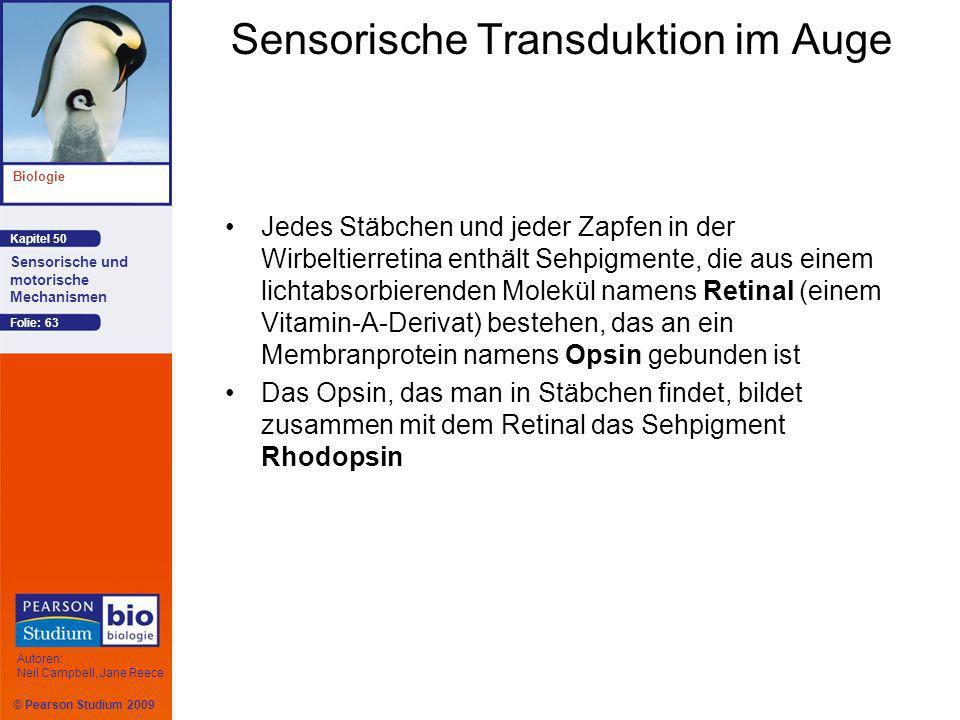 © Pearson Studium 2009 Kapitel 50 Biologie Autoren: Neil Campbell, Jane Reece Sensorische und motorische Mechanismen Folie: 63 Sensorische Transduktio
