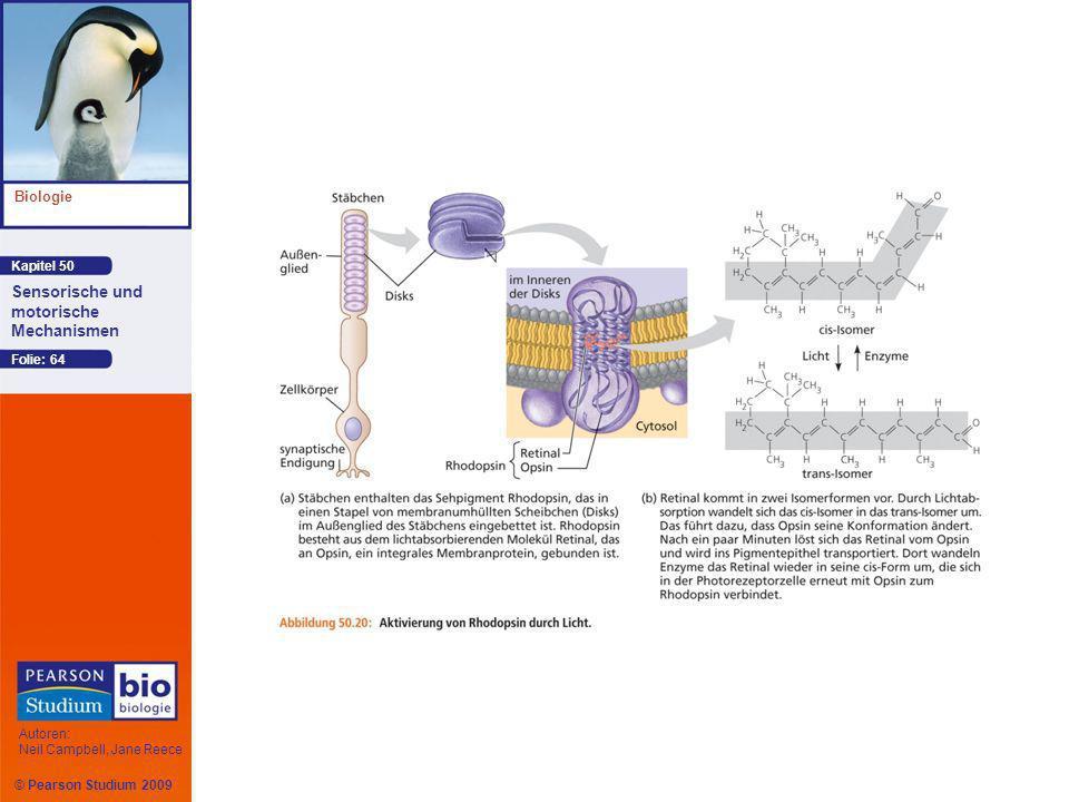 Kapitel 50 Biologie Autoren: Neil Campbell, Jane Reece Sensorische und motorische Mechanismen © Pearson Studium 2009 Folie: 64
