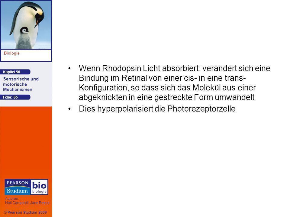 © Pearson Studium 2009 Kapitel 50 Biologie Autoren: Neil Campbell, Jane Reece Sensorische und motorische Mechanismen Folie: 65 Wenn Rhodopsin Licht ab