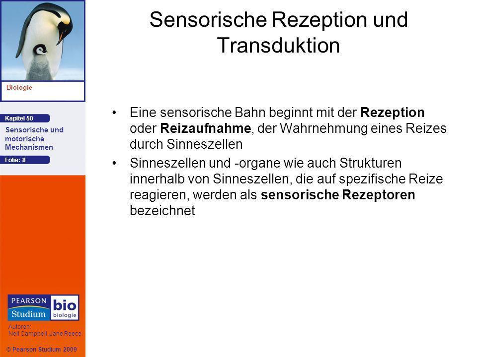 © Pearson Studium 2009 Kapitel 50 Biologie Autoren: Neil Campbell, Jane Reece Sensorische und motorische Mechanismen Folie: 8 Sensorische Rezeption un