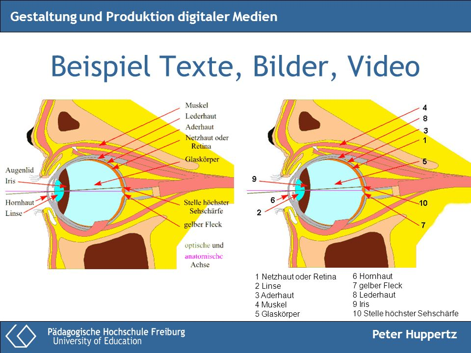 Peter Huppertz Gestaltung und Produktion digitaler Medien Beispiel Texte, Bilder, Video 1 Netzhaut oder Retina 2 Linse 3 Aderhaut 4 Muskel 5 Glaskörpe