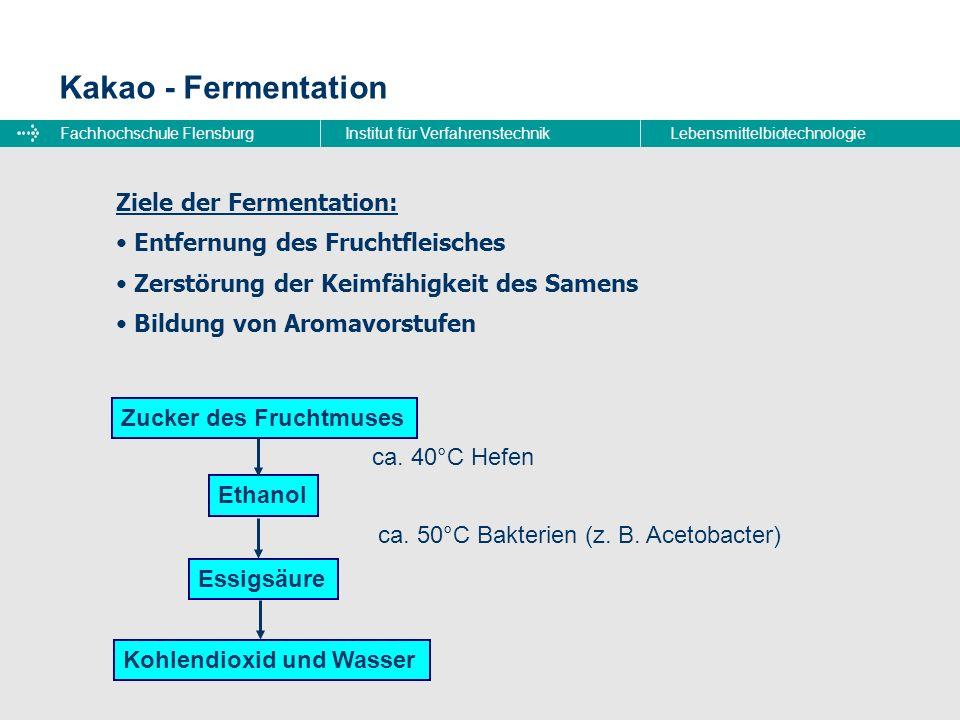 Fachhochschule FlensburgInstitut für VerfahrenstechnikLebensmittelbiotechnologie Kakao - Fermentation Ziele der Fermentation: Entfernung des Fruchtfle