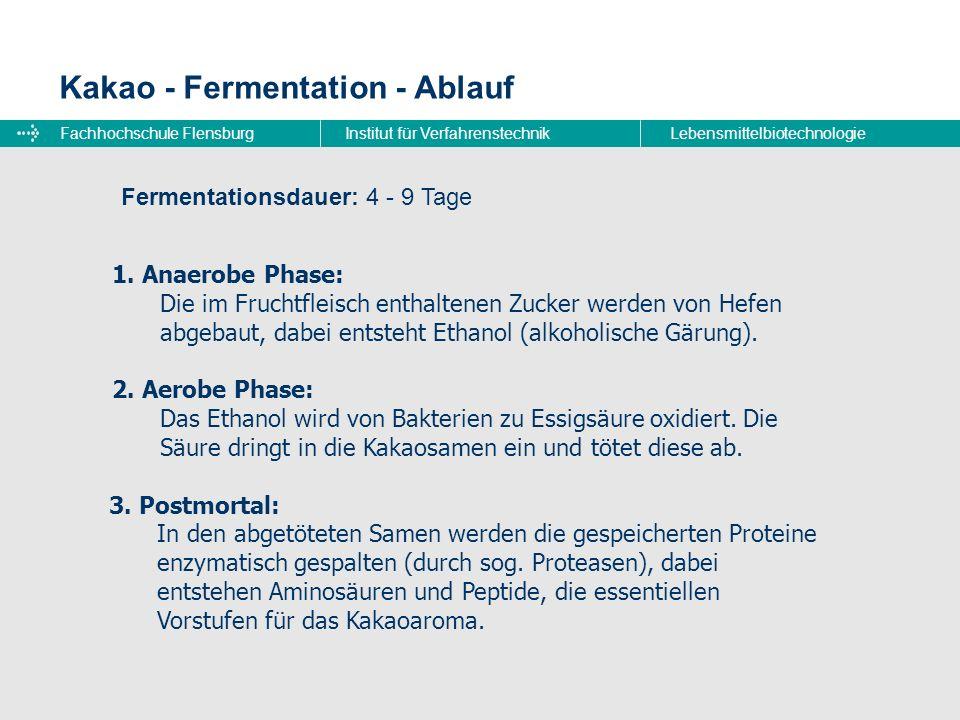 Fachhochschule FlensburgInstitut für VerfahrenstechnikLebensmittelbiotechnologie Kakao - Fermentation - Ablauf 1. Anaerobe Phase: Die im Fruchtfleisch