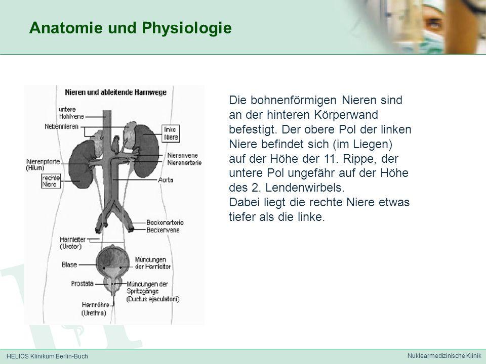 HELIOS Klinikum Berlin-Buch Nuklearmedizinische Klinik Dynamische Nierenfunktionsszintigraphie - Abschätzung der renalen Durchblutung (Gefäßphase 10-15 sec p.i.) - Darstellung von funktionsfähigem Nierenparenchym (Parenchymphase 3-6 min p.i.) - Ausscheidung der radioaktiven Substanz aus dem Nierenparenchym über die Nierenbecken und Ureteren in die Blase (Ausscheidungsphase 10-20 min p.i.) - (Prüfung ob radioaktiver Urin aus Blase in Niere zurückfließt, Reflux) Verwendetes Radiopharmakon: Technetium-99m-MAG-3